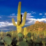 Tips for Buying a Scottsdale Foreclosure
