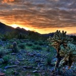 Glimpse of Arizona Beauty at McDowell Sonoran Preserve in Scottsdale