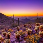 7 Things Everyone Loves About Scottsdale Lifestyle