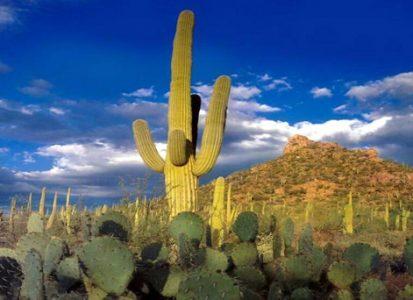 homes in Scottsdale Arizona