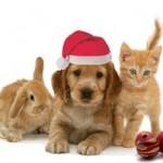 Holiday Pet Festival at WestWorld of Scottsdale