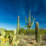Glimpse of Arizona Beauty at McDowell Sonoran Preserve in Scottsdale